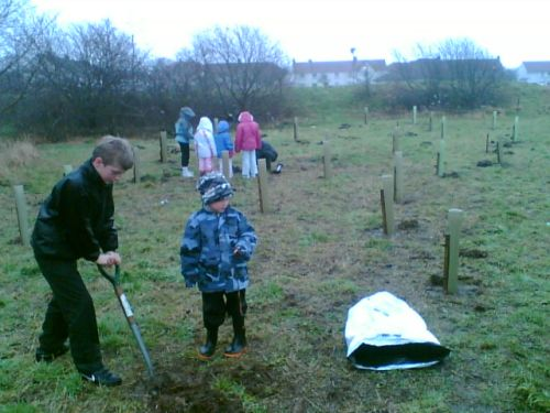 Tree planting in the rain