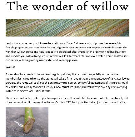 The wonder of willow information sheet