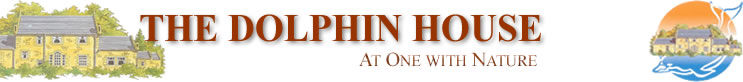 Visit the Dolphin House Website